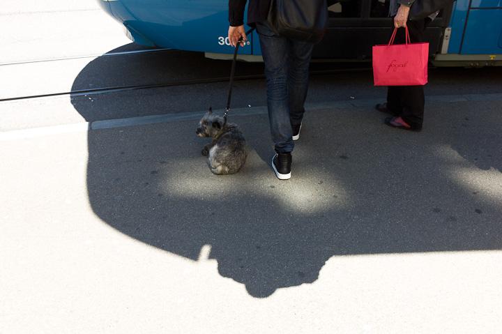 Zürich Tram Hund